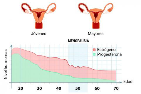 estrógenos y progestágenos en la mujer